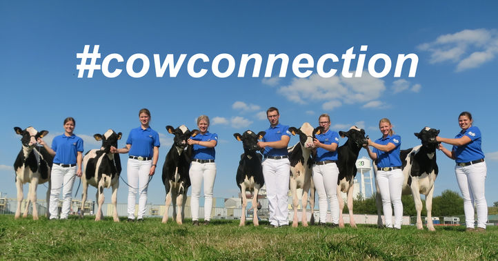 Cowconnection.jpg
